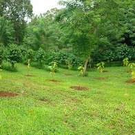 planting jpg