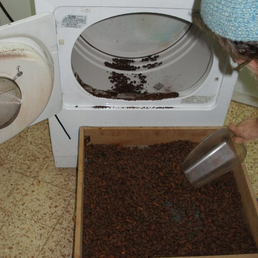 Removing cocoa from the roaster
