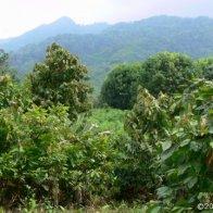 Cacao Territory - Mexico