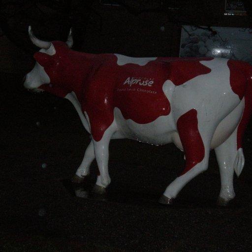 Swiss chocolate cow Rose in rain :), Caslano