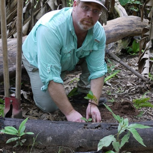 Planting a Wild Cacao Seedling