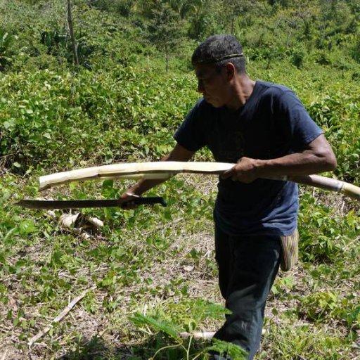 Belize2010-25HarvestingSugarCane