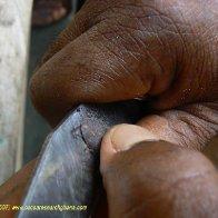 Cut test - cutting an individual bean