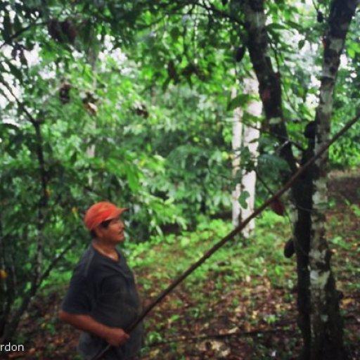 Small Holder Cacao Farmer