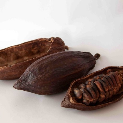 3 types cocoa pods in a row