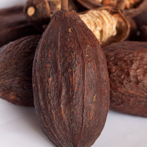 Whole Dried Cocoa Pods