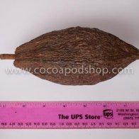 Whole Cocoa Pod Size