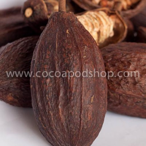 Whole Cocoa Pods