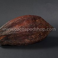 Whole Cocoa Pod