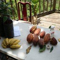 Puerto Rico Cacao