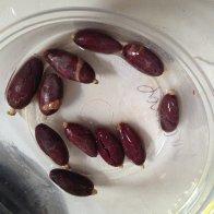 fresh nacional beans