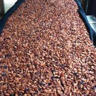 2014 Beauteous Cacao Beans