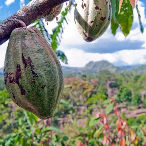 Academia de Cacao